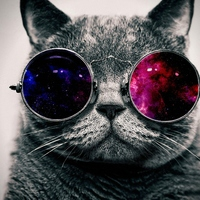 Cool cat hd wallpapers widescreen 8183
